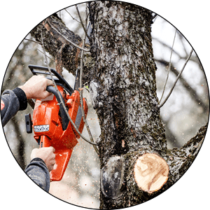 Waukesha Tree Trimming Services