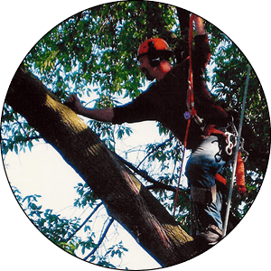 Milwaukee Tree Trimming Services